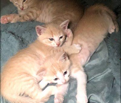 Pumkin kittens